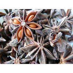 Badianier (Anis Etoilé) fruit en vrac - sachet de 100gr pour tisane