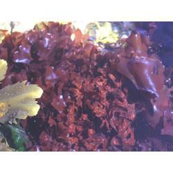 Carragaheen ( Chondrus Crispus) thalle en vrac - sachet de 100gr pour tisane