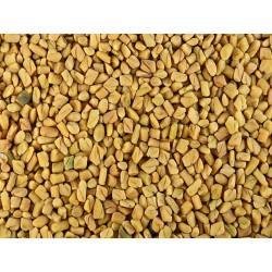 Fenugrec graine en vrac - sachet de 400gr pour tisane