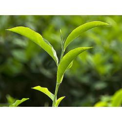 Thé Vert feuille en vrac - sachet de 200gr pour tisane