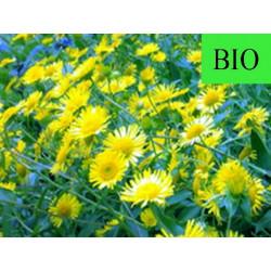 Chrysanthellum Americanum partie aérienne en vrac- sachet de 100g pour tisane