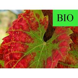 Vigne Rouge feuille extra rouge coupée menu en vrac - sachet de 100gr pour tisane
