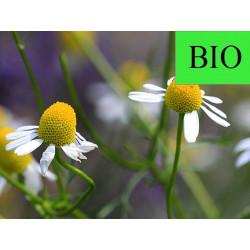 Matricaire BIO capitule floral extra en vrac - sachet de 50gr