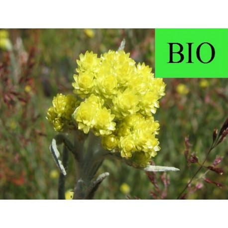 Immortelle fleur Corse en vrac - sachet de 100gr pour tisane