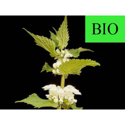 Ortie Blanche ( Lamier Blanc) sommité fleurie en vrac - sachet de 100gr pour tisane